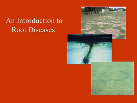 An Introduction to Root Diseases. Introduction to Root Diseases (some general comments) 1.Root diseases are more difficult to diagnose than foliar diseases.