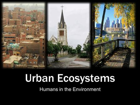 Urban Ecosystems Humans in the Environment. The Human Element Until the 19th century, American Bison roamed the Great Plains by the millions, providing.