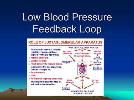 Low Blood Pressure Feedback Loop. Kidneys are a part of this system as well… If your blood pressure is too low… 1)Blood pressure receptors in the juxtaglomerular.