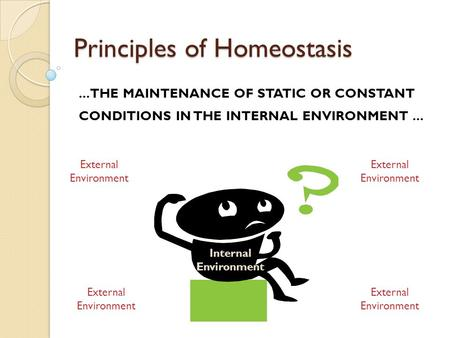 Principles of Homeostasis... THE MAINTENANCE OF STATIC OR CONSTANT CONDITIONS IN THE INTERNAL ENVIRONMENT... External Environment Internal Environment.