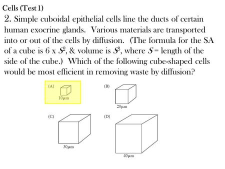 Cells (Test 1) 2. Simple cuboidal epithelial cells line the ducts of certain human exocrine glands. Various materials are transported into or out of the.