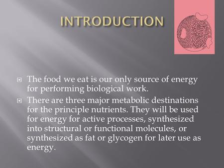 The food we eat is our only source of energy for performing biological work. There are three major metabolic destinations for the principle nutrients.