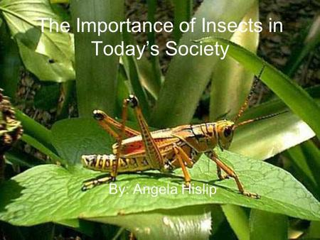 The Importance of Insects in Todays Society By: Angela Hislip.