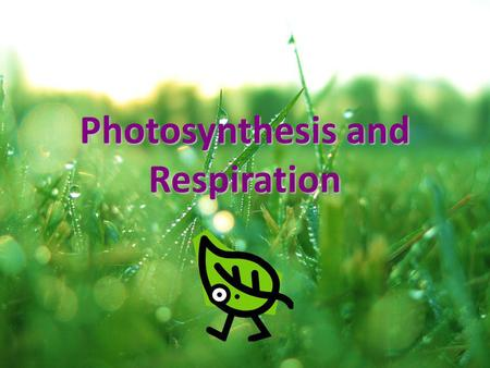 Photosynthesis and Respiration. What is photosynthesis? A chemical reaction that occurs in plants that changes light energy to chemical energy A chemical.