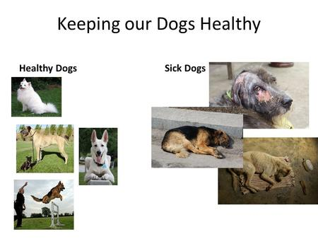 Keeping our Dogs Healthy Healthy DogsSick Dogs. What are we going to talk about? Basic Health care food water shelter Vaccinations/disease prevention.