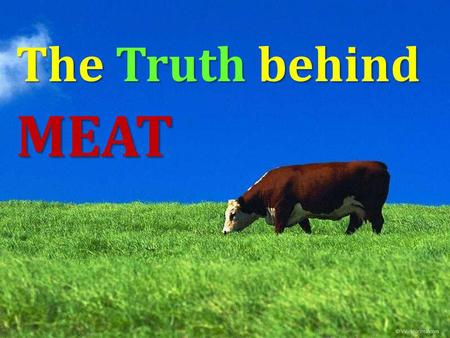 The Truth behind MEAT. It is not about religion - it is about caring for the environment, about loving yourself, your children and animals.
