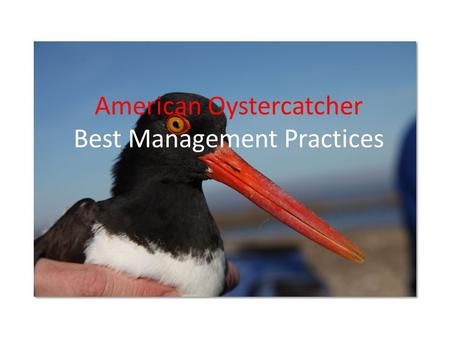 American Oystercatcher Best Management Practices.
