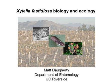 Xylella fastidiosa biology and ecology