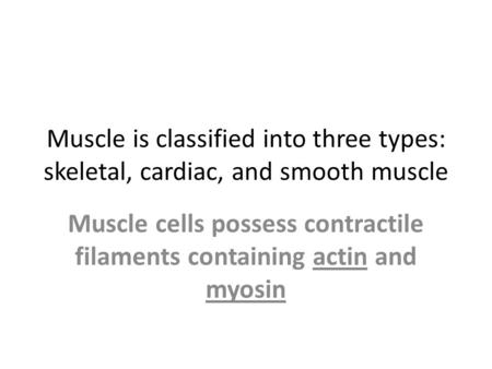 Muscle cells possess contractile filaments containing actin and myosin