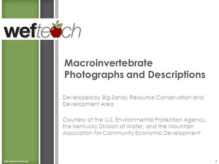 Macroinvertebrate Photographs and Descriptions