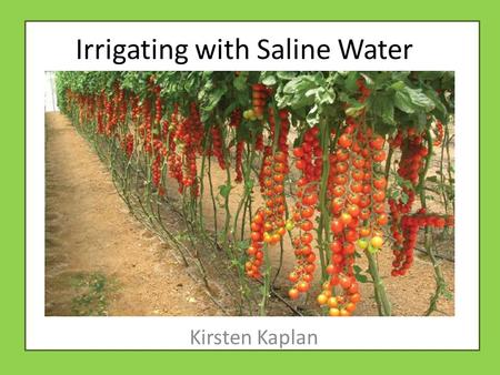 Irrigating with Saline Water Kirsten Kaplan. Agriculture in Israel In 2010, 42% of Israels exports ($2.13 billion) were agricultural 60% of fresh vegetable.