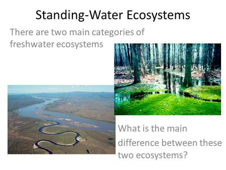 Standing-Water Ecosystems There are two main categories of freshwater ecosystems What is the main difference between these two ecosystems?