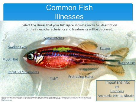 Common Fish Illnesses Important Info: