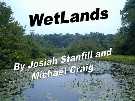 Endangered 6% of earths surface Each wetland differs due to variations in soils, landscape, climate, water regime and chemistry, vegetation, and human.