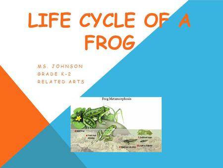 LIFE CYCLE OF A FROG MS. JOHNSON GRADE K-2 RELATED ARTS.
