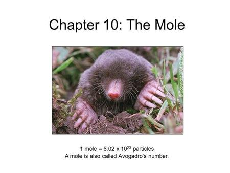Chapter 10: The Mole 1 mole = 6.02 x 10 23 particles A mole is also called Avogadros number.
