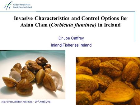 Invasive Characteristics and Control Options for Asian Clam (Corbicula fluminea) in Ireland Dr Joe Caffrey Inland Fisheries Ireland ISI Forum, Belfast.