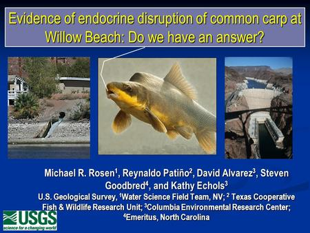 Evidence of endocrine disruption of common carp at Willow Beach: Do we have an answer? Michael R. Rosen 1, Reynaldo Patiño 2, David Alvarez 3, Steven Goodbred.