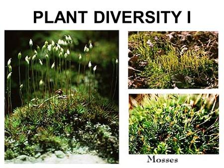 PLANT DIVERSITY I. YOU MUST KNOW… WHY LAND PLANTS ARE THOUGHT TO HAVE EVOLVED FROM GREEN ALGAE SOME OF THE DISADVANTAGES AND ADVANTAGES OF LIFE ON LAND.