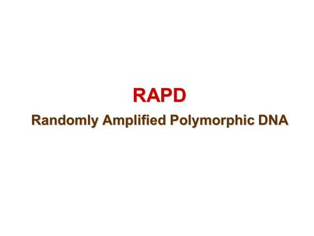 RAPD Randomly Amplified Polymorphic DNA RAPD - a method based on PCR developed in 1990. - RAPD is different from conventional PCR as it needs one primer.