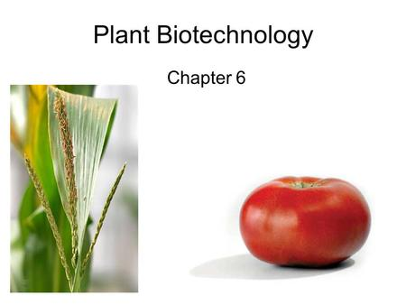 Plant Biotechnology Chapter 6.