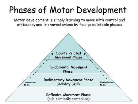 Phases of Motor Development Motor development is simply learning to move with control and efficiency and is characterized by four predictable phases Reflexive.