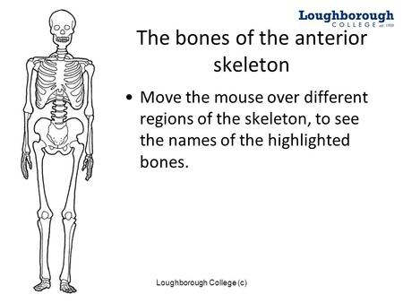 The bones of the anterior skeleton