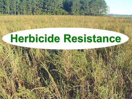 Herbicide Resistance. Discussion Topics What is resistance? What causes resistance?