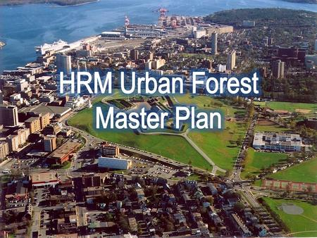 HRM Urban Forest Master Plan HRMs Urban Forest History Themes in the Plan Management Framework Status of the Plan Today.