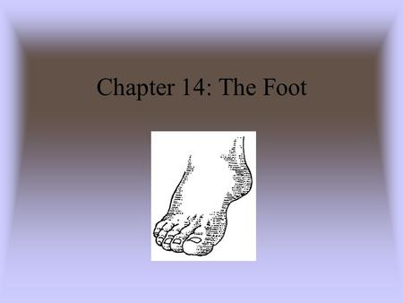 Chapter 14: The Foot. Anatomy of the Foot Muscle of the Foot and Lower Leg.