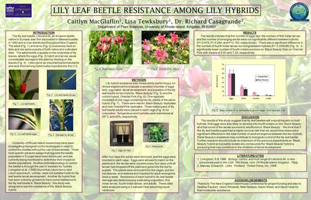 LILY LEAF BEETLE RESISTANCE AMONG LILY HYBRIDS Caitlyn MacGlaflin 1, Lisa Tewksbury 1, Dr. Richard Casagrande 1. 1 Department of Plant Sciences, University.