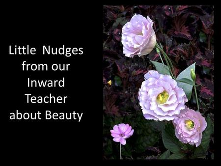 Little Nudges from our Inward Teacher about Beauty.