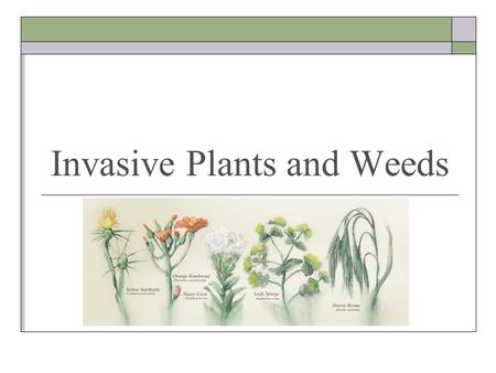 Invasive Plants and Weeds. Why Care? The spread of noxious weeds: Signal the decline of entire ecological watersheds. Severely impact the beauty and biodiversity.