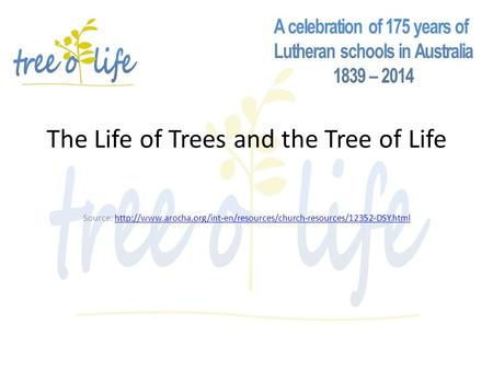 The Life of Trees and the Tree of Life Source: