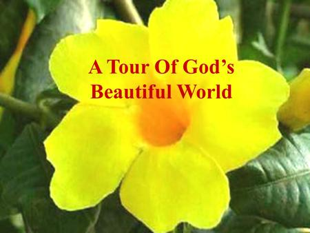 A Tour Of Gods Beautiful World With the sweet smell of His colorful flowers.