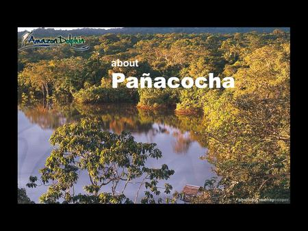 About Pañacocha. and Amazon Dolphin Lodge The Pañacocha Protected Forest (56.ooo ha), is central to the critical system of protected areas in Northwestern.