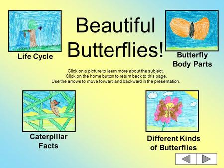 Beautiful Butterflies! Click on a picture to learn more about the subject. Click on the home button to return back to this page. Use the arrows to move.