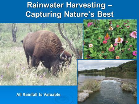 Rainwater Harvesting – Capturing Natures Best All Rainfall Is Valuable.