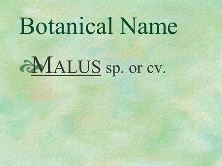 Botanical Name M ALUS sp. or cv. Pronunciation MAY - lus HY- brid - a.