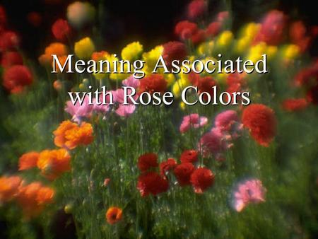 Meaning Associated with Rose Colors. Free template from www.brainybetty.com2.