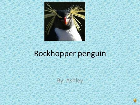 Rockhopper penguin By: Ashley Have you ever seen a black and white thing waddling around the beach? Look again because it might be a rockhopper penguin.