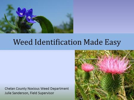 Weed Identification Made Easy
