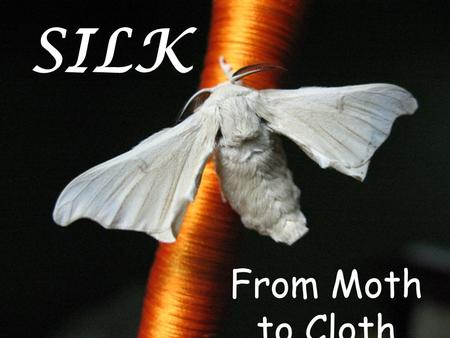 SILK From Moth to Cloth. The Legend Xi-Ling-Shi, Wife of the Yellow EmperorXi-Ling-Shi, Wife of the Yellow Emperor.