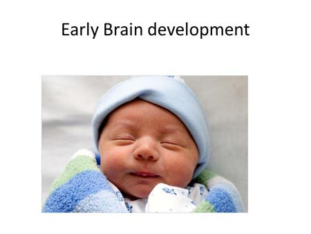 Early Brain development Development of the Brains Wiring Neurogenesis: Manufacturing of brain cells. Migration: Moving cells to their pre-determined.