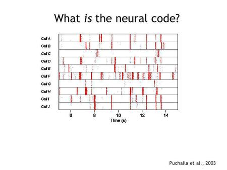 What is the neural code? Puchalla et al., 2003. What is the neural code? Encoding: how does a stimulus cause the pattern of responses? what are the responses.