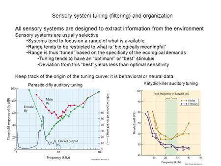 Sensory system tuning (filtering) and organization All sensory systems are designed to extract information from the environment Sensory systems are usually.