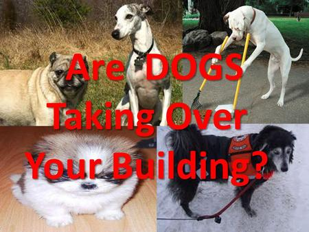 Are DOGS Taking Over Your Building?. Service Animals in Places of Public Accommodation.