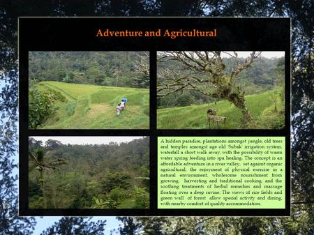 Adventure and Agricultural Palaga Presentation A hidden paradise, plantations amongst jungle, old trees and temples amongst age old 'Subak' irrigation.