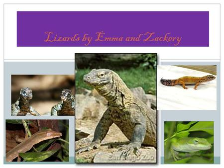 Lizards by Emma and Zackery. Frilled lizard Monitor lizards have forked tongues.