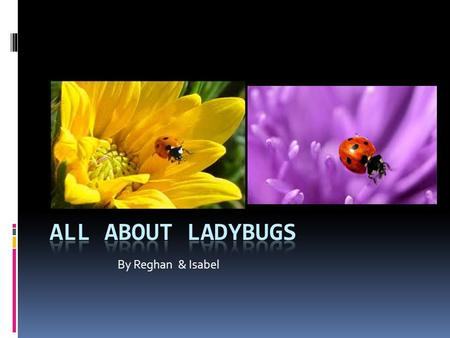 By Reghan & Isabel. Descriptive facts In many cultures, ladybugs are good luck. Ladybugs are beetles. A ladybug has two hard front wings.